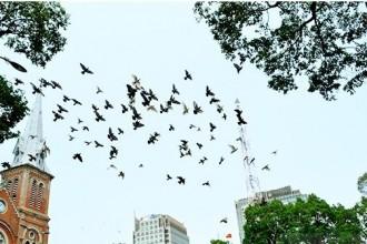 Khi ngắm nhìn đàn chim bay lượn, chắc hẳn ai cũng có một cảm giác bình yên.