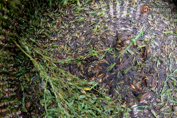 Giỏ chứa hàng nghìn con châu chấu của người bán đem đến từ huyện Hóc Môn.