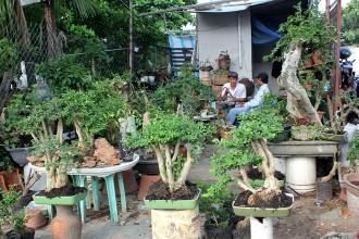 Phí thuê mặt bằng ở đây từ 3-10 triệu một gian hàng tùy vào diện tích. Anh Thử, chủ một cửa hàng chuyên bán cây kiểng cho biết, giá ở đây rất bình dân, thấp nhất chỉ vài nghìn đồng và có đủ loại cho khách lựa chọn. Loại chăm sóc cầu kỳ như bonsai cũng chỉ 0,3-5 triệu đồng.