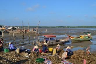 Thạnh An là xã đảo thuộc huyện Cần Giờ, cách trung tâm TP HCM hơn 70 km về phía Đông. Người dân trên đảo chủ yếu sinh sống bằng nghề nuôi trồng, đánh bắt hải sản, làm muối…