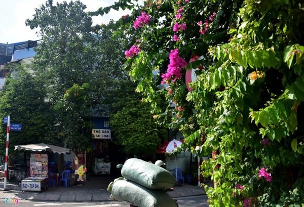 """Những biển báo bị lùm cây che khuất như """"bẫy"""" tài xế tại đường Phan Huy Chú, quận 5."""