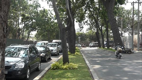 Tổng thể cây xanh cần bứng dưỡng, đốn hạ trên đường Tôn Đức Thắng Quận 1 - nơi hạng mục nhà ga Ba Son, gói thầu 1b dự án xây dựng tuyến đường sắt Đô thị số 1 Bến Thành - Suối Tiên đi qua - Ảnh: Chế Thân