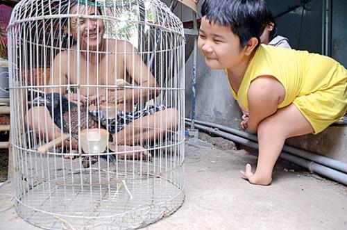 """""""Chim cánh cụt"""" rất thích ngồi xem ba chăm sóc chú chim bìm bịp nhỏ. Thỉnh thoảng còn vui vẻ đùa giỡn, nói chuyện với chú chim."""