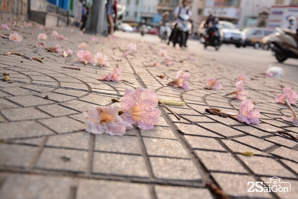 Sài Gòn dù có vội vã vẫn có ngày bình yên.