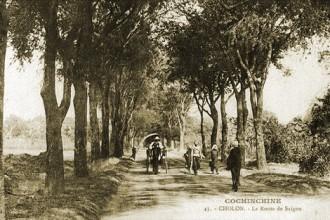 Những hàng cây xanh trăm năm quý giá ở Sài Gòn 4