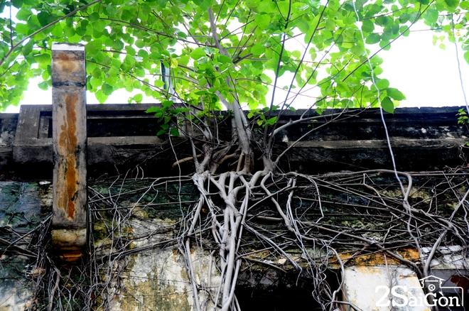 Biệt thự cổ 'bị trăn quấn' đầy vẻ ma mị giữa lòng Sài Gòn 3