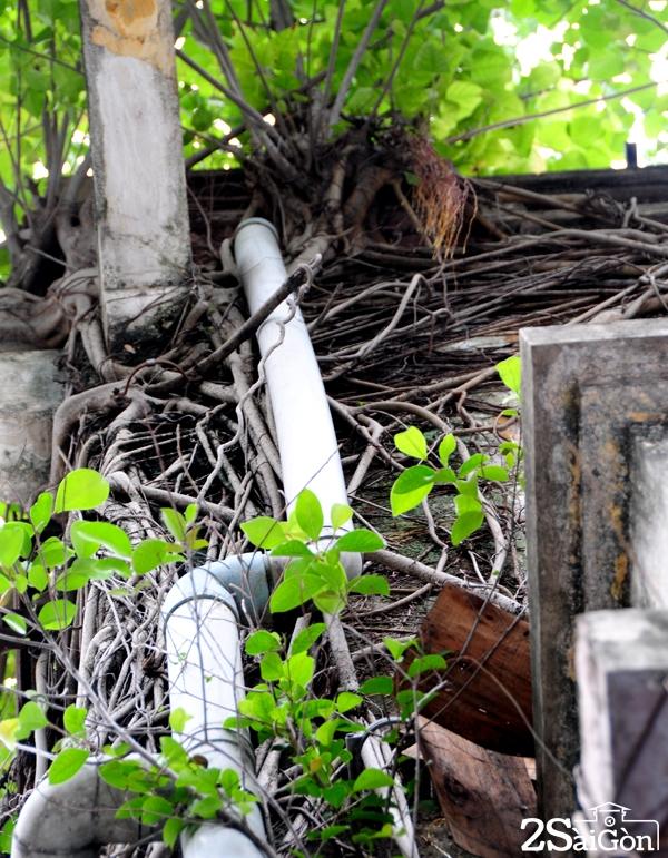 Biệt thự cổ 'bị trăn quấn' đầy vẻ ma mị giữa lòng Sài Gòn 5