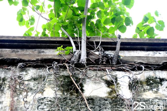 Biệt thự cổ 'bị trăn quấn' đầy vẻ ma mị giữa lòng Sài Gòn 7