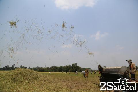 Đi Sài Gòn gặt lúa mướn 1