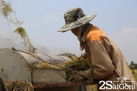 Đi Sài Gòn gặt lúa mướn 10