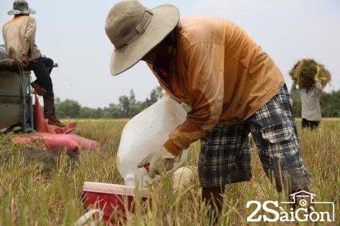 Đi Sài Gòn gặt lúa mướn 11
