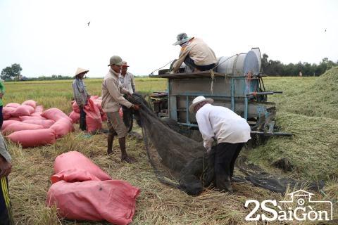 Đi Sài Gòn gặt lúa mướn 14