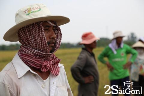 Đi Sài Gòn gặt lúa mướn 3