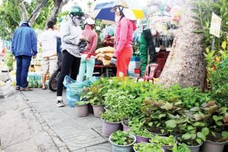 Người Sài Gòn thích trồng rau sạch bằng rau giống ươm sẵn
