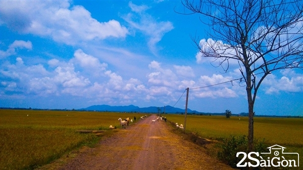 Con đường quê dẫn vào Tứ Phương Thất Đảo
