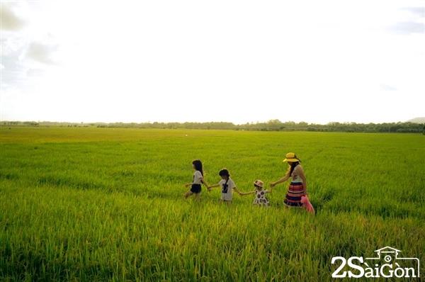 Những cánh đồng lúa bạt ngàn