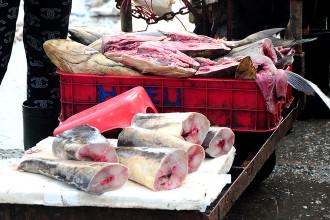 Cá bớp, loại cá có giá cao trên thị trường được rao bán với giá chưa đến 100.000 đồng/kg.