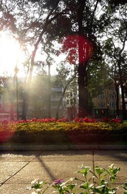 Chỉ vào buổi sáng sớm, người dân hay du khách đến Sài Gòn mới có thể hít một hơi thật sâu để cảm nhận luồng không khí trong lành len lỏi vào lồng ngực. Trong không khí có mùi lá cây tươi mới, mùi của hạt sương thanh khiết, mùi của sự thong dong trước khi bắt đầu nhịp sống tất bật. Phải chăng sự ồn ào, náo nhiệt của thành phố càng làm giây phút thanh tĩnh này trở nên đắt giá và quý báu gấp nhiều lần?