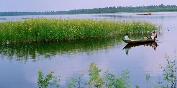 Màu hoa vàng ươm của điên điển đang mùa nở rộ làm con sông chiều thêm mộng mơ, lãng mạn - Ảnh: yume