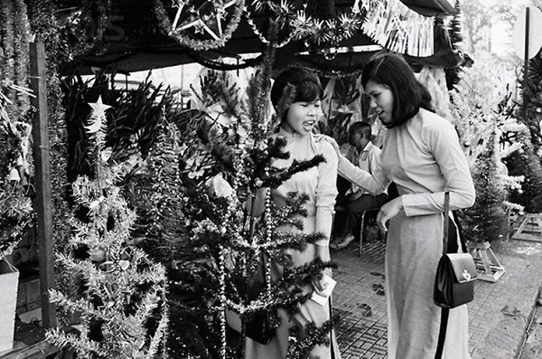 Thông là loại cây không thể thiếu trong dịp Giáng Sinh, 1967.