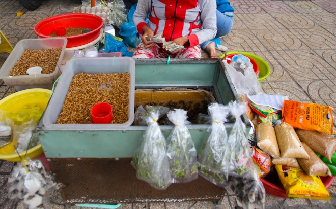"""Dù không có tên, người ta vẫn gọi đây là """"chợ sâu bọ Sài Gòn"""". Mặt hàng được bán nhiều nhất là sâu, dế, rồi đến cào cào châu chấu. Ngoài ra còn có thức ăn cho chim, gà…"""
