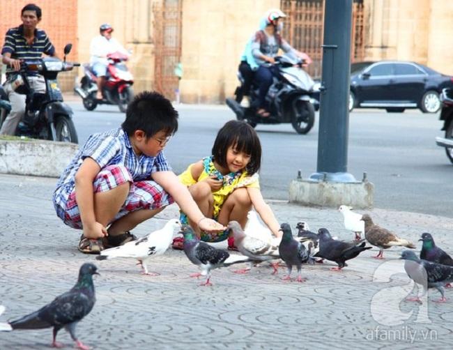 Cho những chú chim bồ câu ăn vài ba nắm thóc, nguồn: internet