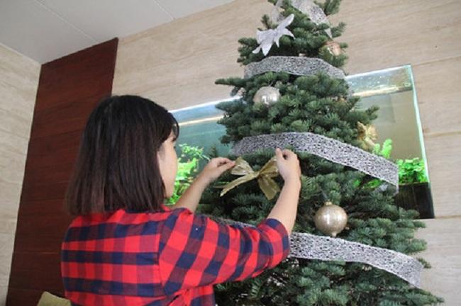 Những quả cầu thủy tinh lung linh được trang trí trên cây thông thật. ẢNH LÊ NAM