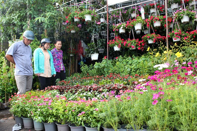 Trên đường Thành Thái, quận 10, TP.HCM, không khí mua bán các loại hoa kiểng bắt đầu náo nhiệt, thời điểm này, các vườn hoa kiểng ở đây đều nhập về rất nhiều các loại hoa phục vụ chợ Tết.
