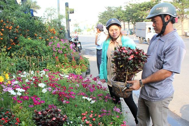 """Anh Thiết, nhà ở quận 11 cho biết, đây là thời điểm thích hợp để lựa được hoa tươi và đẹp. Kinh nghiệm của anh là mua hoa càng sát Tết, hoa thường ít đẹp nhưng giá lại cao, mất công sức chen lấn, hoặc không có người chở hàng. """"Hện giờ mỗi chậu hoa tôi mua chỉ có giá từ 25.000 - 70.000 đồng tùy loại, nhưng đến Tết giá có thể tăng gấp đôi. Tôi sẽ chọn mua những chậu hoa vừa hé nụ về chăm sóc, để đến Tết nở bung là đẹp"""", anh Thiết nói."""