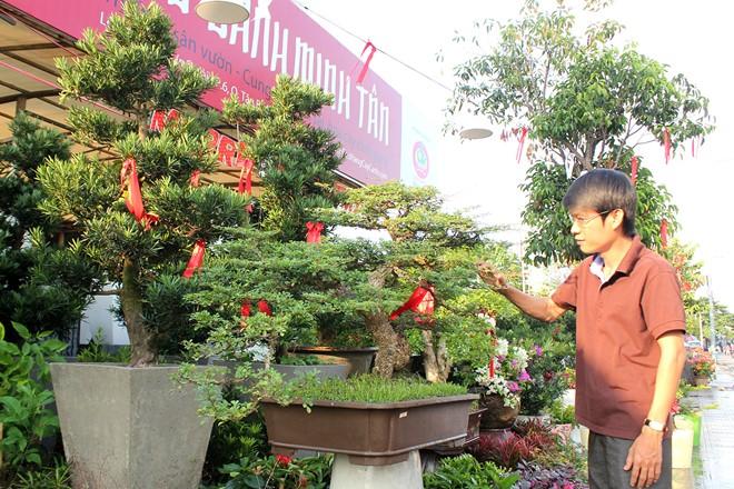 Dịch vụ cho thuê cây kiểng cũng nhộn nhịp không kém. Anh Trịnh Minh Tuyền, chủ một vườn cây kiểng trên đường Thành Thái cho biết, dịch vụ thuê cây kiểng năm nào cũng đông khách sớm, khách tới trễ nhiều lúc không còn nhiều cây đẹp để thuê. Tại cửa hàng anh, giá bán những loại cây cảnh, bon sai từ 5 đến 20 triệu, trong khi giá thuê chỉ phân nửa nên được nhiều khách ưa chuộng. Trung bình mỗi năm vườn anh có từ 2.000 - 3.000 khách thuê cây. Vào thời điểm này, vườn anh đã có hơn 200 khách hàng đăng ký thuê sớm và đã đặt cọc.