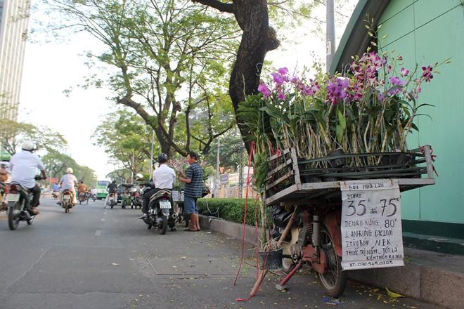 Trên đường Nguyễn Văn Cừ, quận 5, những xe chở hoa bán dạo cũng khá đông khách. Lan Dendro được rao bán từ 35.000 - 75.000 đồng/ chậu.