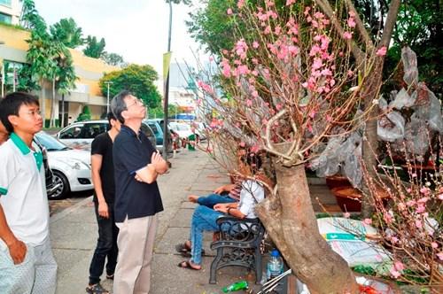 Đào tết hút hồn người Sài Gòn đến chiêm ngưỡng, chụp ảnh…