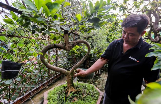 Ngoài những cây mai hàng chục năm tuổi, anh Khánh còn sở hữu những cây với hình dáng độc dáo như hình trái tim.