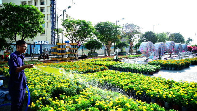 Công nhân tưới nước cho những chậu hoa để chuẩn bị trang trí tại những tiểu cảnh trên đường hoa Nguyễn Huệ - Ảnh: HỮU THUẬN