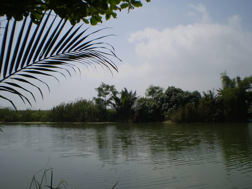 ở phía bên kia con sông Tiền xa lắc lơ kia, chị nó cũng giống như con cá đối đang nằm trên cối đá.