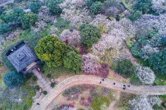 Những bức ảnh chụp từ trên cao cho thấy mận nở trắng khắp khu vực Chaoshan, Hàng Châu, thủ phủ tỉnh Chiết Giang, Trung Quốc. Ảnh chụp ngày 4/2.