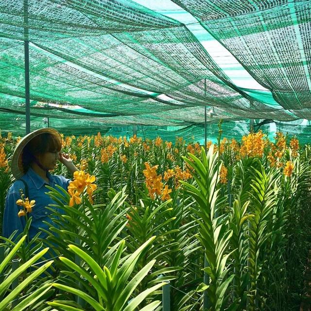 Nông trang còn trồng nhiều cánh đồng hoa, hồ giải trí cho bạn tha hồ ngắm cảnh và chụp hình, lưu lại những kỉ niệm.