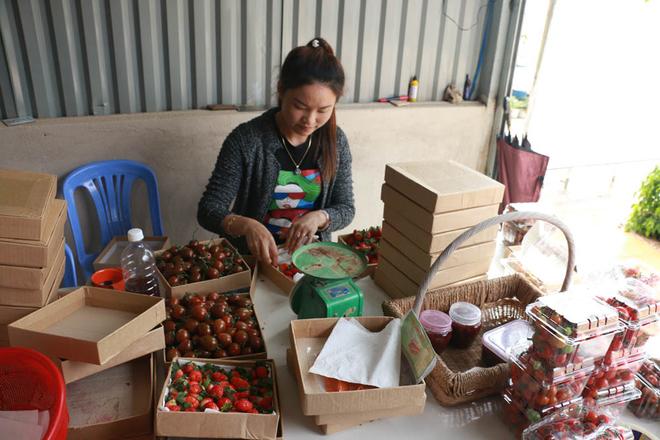 Ông Phước hiện có 2 kênh tiêu thụ sản phẩm chính là bán trực tiếp cho khách tham quan và cho các cửa hàng rau quả sạch ở Đà Lạt và TP HCM. Trong đó, cà chua bỏ mối giá 50.000 đồng một kg, khách tham quan hái tại vườn là 70.000 đồng. Dâu tây bỏ mối có giá dao động 170.000-220.000 đồng một kg, hái tại vườn là 300.000 đồng mỗi kg.