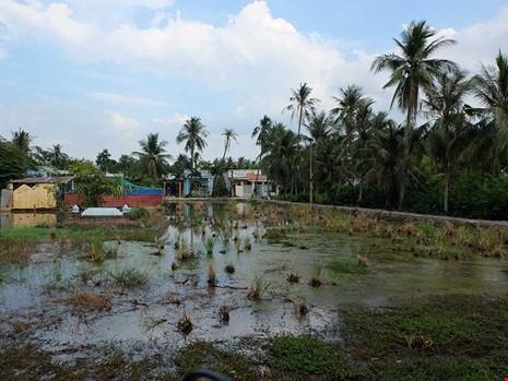 Đất đai hoang hóa trong khu bán đảo Thanh Đa. Ảnh: Việt Hoa.