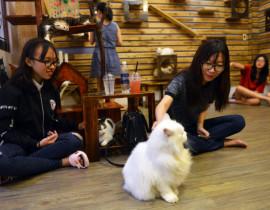 Chơi với mèo ở cafe trên đường Nguyễn Trọng Tuyển - Ảnh: DUYÊN PHAN