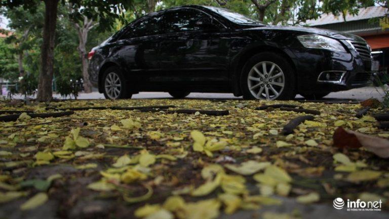 """Một chiếc xe đậu trên """"thảm hoa"""" vàng dưới góc đường."""