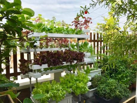 Chị bắt đầu trồng nhiều rau khi con bị ốm để bé luôn có nguồn thực phẩm an toàn. Các loại rau salad được trồng thủy canh còn rau muống, mồng tơi... được trồng bằng chậu nhựa nhiều tầng để tiết kiệm diện tích.