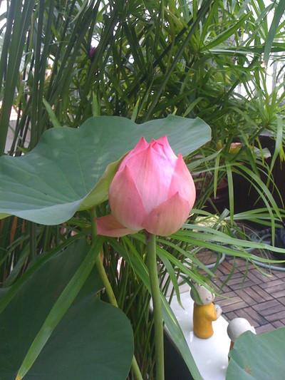 Dưới mỗi gốc cây to, chị trồng thêm rau càng cua giữ ẩm cho đất. Nhờ thế, dù Sài Gòn nắng nóng quanh năm nhưng khu vườn luôn xanh tốt
