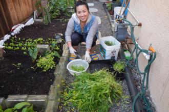 Chị Hoàng Hà, 35 tuổi, sống tại thành phố Hayward, thuộc bang California. Hàng ngày, ngoài công việc là chủ một tiệm nail, chị chăm sóc thêm vườn rau rộng 45m2 (3x15) của gia đình như một cách giải trí.