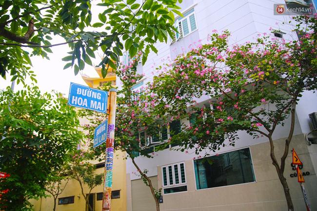 Điều khiến nhiều người tò mò chính là những con đường nhỏ cắt ngang đường Phan Xích Long đều đặt tên theo các loài hoa. Có tất cả 13 con đường mang tên hoa như thế.