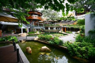 Lần đầu bước vào Du Miên Garden Café (đường Phan Văn Trị, quận Gò Vấp), nhiều người bất ngờ vì trong phố lại có một quán cà phê thoáng rộng, có 4 cây cổ thụ cỡ vài chục năm tuổi, đang sống chung hài hòa cùng kiến trúc mới.