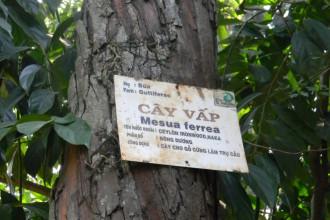 Thân cây vấp 1 trong Thảo Cầm Viên – Ảnh: SƠN TRẦN