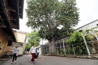 Bao báp là loài cây nổi tiếng ở châu Phi, ít ai biết rằng ở Việt Nam cũng có nhiều nơi đã trồng được loài thực vật đặc biệt này. Tại TP.HCM, nằm trong khuôn viên trường Đại học sư phạm TP.HCM (quận 5) có một cây bao báp to lớn và đã được trồng từ 25 năm qua.
