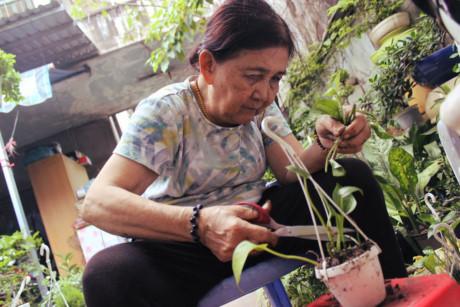 Bà cho biết gia đình có truyền thống trồng hoa hơn ba đời ở Cái Mơn (Bến Tre). Các anh chị em của bà vẫn giữ nghiệp cũ khi lên TP cũng mở mấy cửa hàng hoa ở địa chỉ khác, trong đó có ở đường Thành Thái (quận 10).