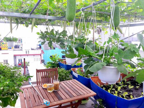Hai vợ chồng cũng bố trí được một góc nhỏ xinh xắn ngồi uống cà phê, tiếp đón bạn bè cùng đam mê trồng trọt.